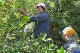 央视网丨两万多名贫困人口长期受益 湖南永州30万亩油茶丰收啦
