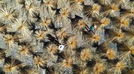 湖南常寧:楠竹產業助農增收