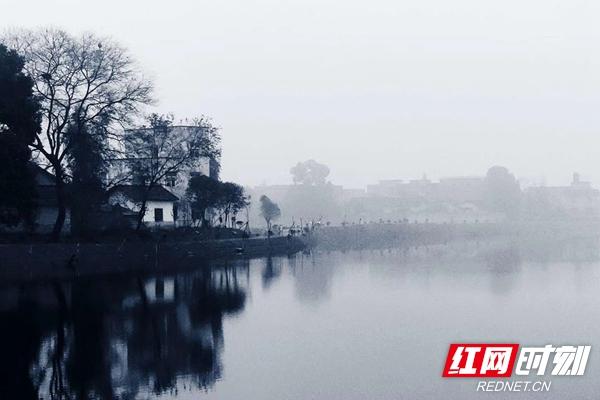 秋品莲城丨粉墨唐家湖湿地