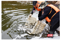 视频|沅江增殖放流 898万尾鱼进湖泊沟渠自由生长