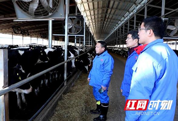 江华:指导养殖场做好防寒保暖 保障冬季禽畜温暖过冬