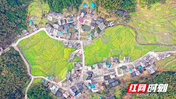 千马坪瑶族村四面环山,森林覆盖率90%以上,树林、民居与金黄的油菜花相互辉映,流淌着春的气息,呈现一派春意融融的宜人景象。