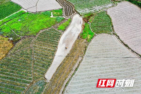 4月19日,湖南省永州市蓝山县塔峰镇高阳村、榴源村,农民正在冒雨翻田、插秧。