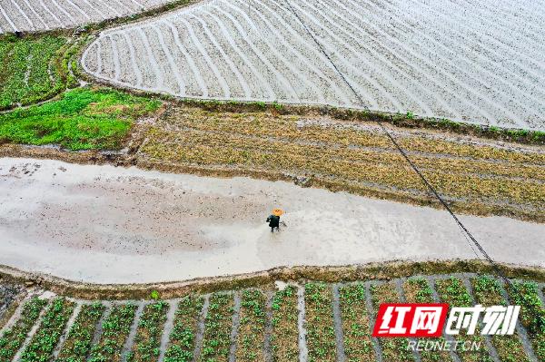农民忙春耕。
