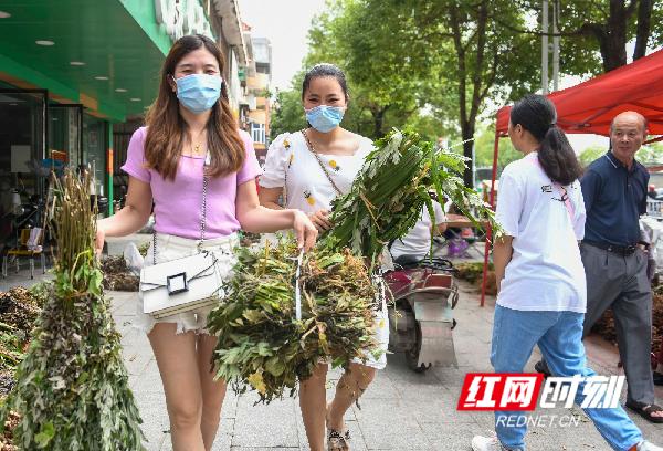 端午节临近,人们纷纷购买艾叶、菖蒲、青蒿等避暑草药,以达到驱虫祛瘟的效果。