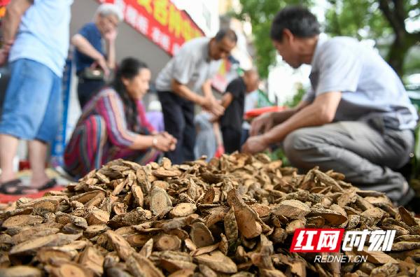 红网时刻永州6月11日讯(通讯员 蒋克青)6月11日,市民在湖南省永州市道县街头选购草药。