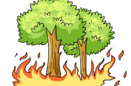 应急科普丨关于森林防火,这些知识你必须知道!
