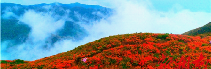 13th Liuyang Dawei Mountain Azalea Festival