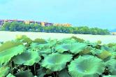 寧鄉紫(zi)龍(long)湖(hu)︰小(xiao)橋荷(he)影,美不勝收(shou)
