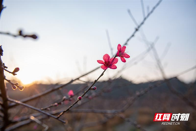 组图 | 春天在沙洲的田野里