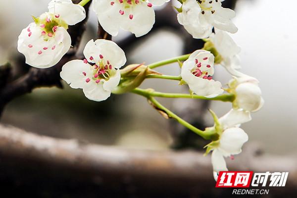 玉容寂寞泪阑干,梨花一枝春带雨。