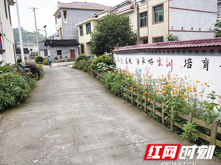 大兴村村道文化墙.jpg