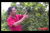 农民丰收丨亚洲城娱乐手机登录入口山枣村:鱼跃人欢奔小康