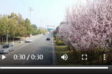 湖南湘乡:樱花绽放 春意浓