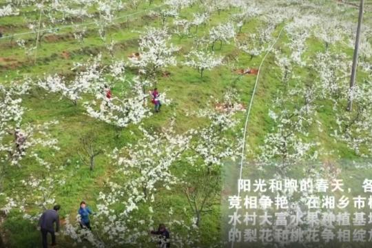 短视频   梨花如雪桃花红,春暖花开正当时