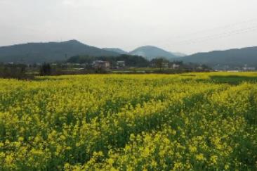 3月17日湘乡新闻
