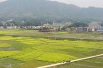 【春满龙城】 湘乡市梅桥镇:油菜花开引客来 乡村旅游好风光