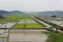 湘乡市梅桥镇:集中育秧省力增效 打好春耕生产第一仗