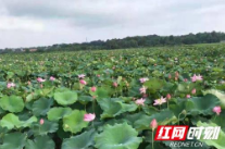 亚洲城娱乐手机登录入口泉塘镇:移民产业帮扶让群众口袋富起来、生活美起来