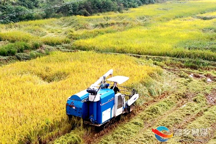 湘乡:荒地变良田 水稻迎丰收