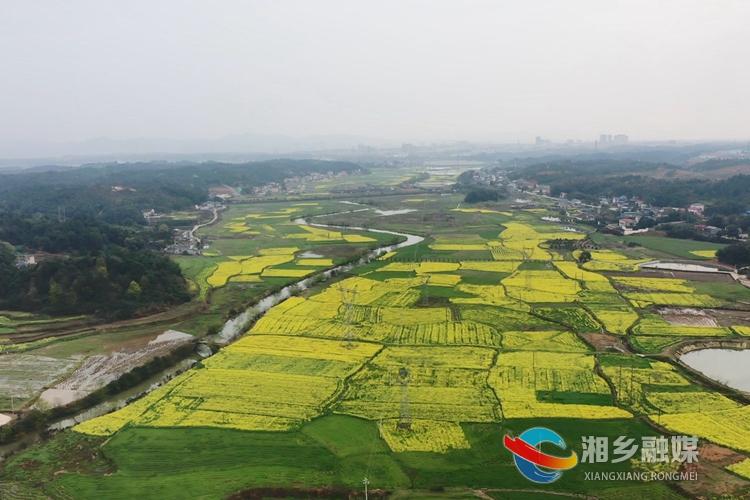 """油菜花开 湘乡最美""""网红公路""""来了"""