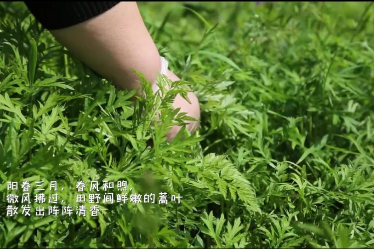 短视频   蒿子粑粑-舌尖上的春天