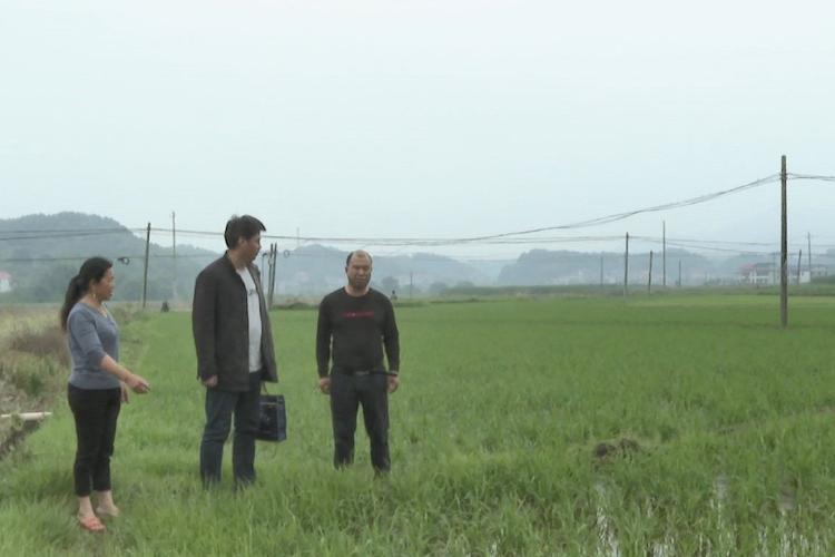 """【我为群众办实事】湘乡:146名农技人员深入田间地头""""问诊把脉"""""""