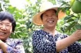 湘乡这五年|乡村振兴新画卷,人民生活幸福景!