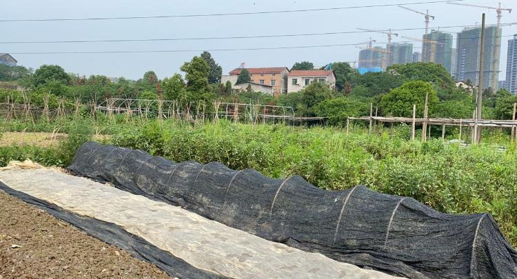 貼心送農資 助力蔬菜種植