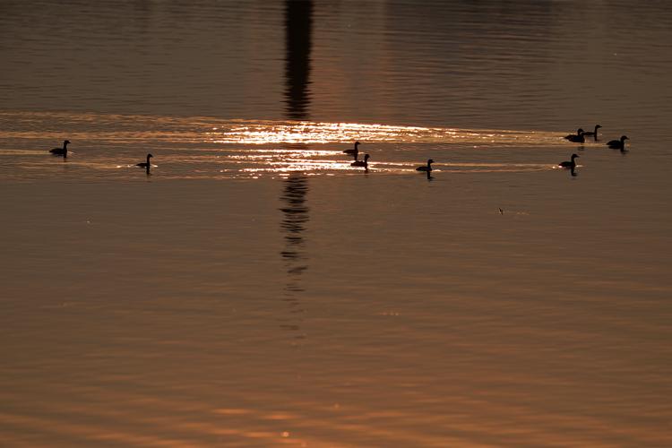 成群水禽聚集在东江湖上。