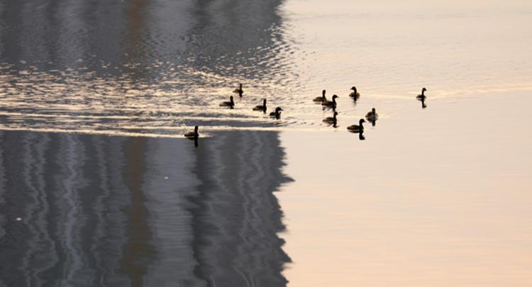 资兴:水暖鸭先知