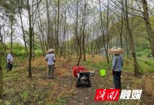 隆回县农业农村局开展统防统治控制蝗灾