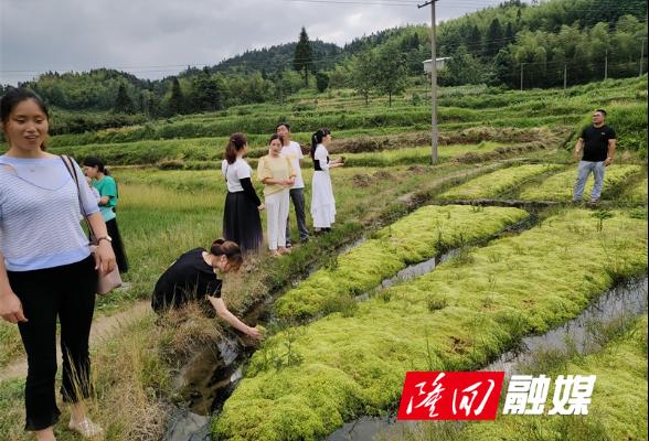 六都寨镇西山村:产业振兴在行动