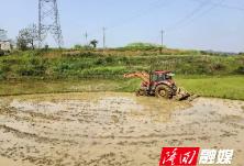 """三阁司镇抢抓农时 按下双季稻生产""""快进键"""""""