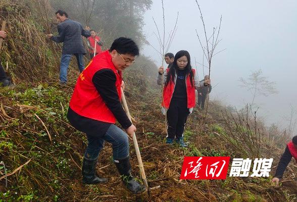 """小沙江镇志愿者开展""""创森""""植树活动"""