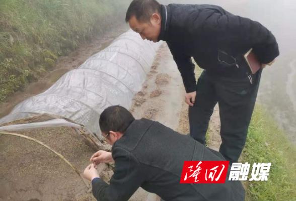 大水田乡:加强农业指导  保障春耕生产
