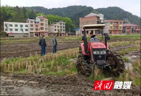 县政府办、县金融服务中心到联点村督导双季稻生产工作