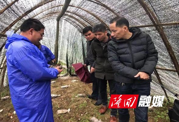 县农业农村局到小沙江镇办理县人大代表建议