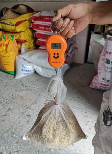 七江镇开展早稻测产工作