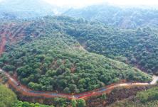 浏阳市林业局:打好发展组合拳,交出绿色生态答卷
