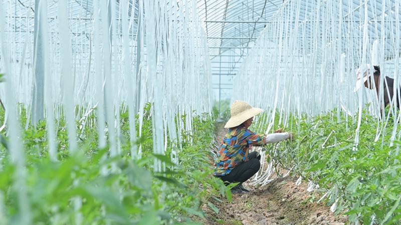 09版农业发展-2.jpg