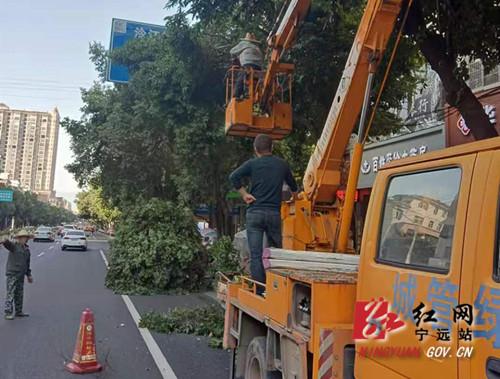 宁远:及时修剪遮挡指示牌树枝 确保道路安全畅通_副本_副本500.jpg