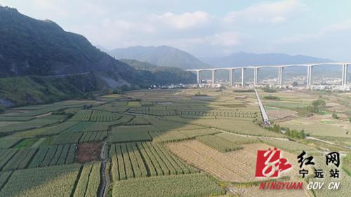宁远:千亩高粱喜丰收  订单农业促增收_副本500.jpg