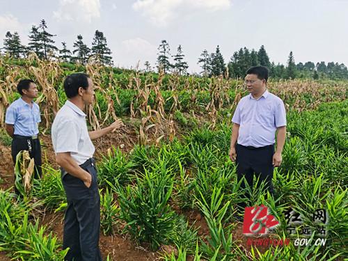 宁远:党建引领促发展 特色种植产业旺_副本500.jpg