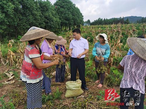 宁远:党建引领促发展 特色种植产业旺2_副本500.jpg