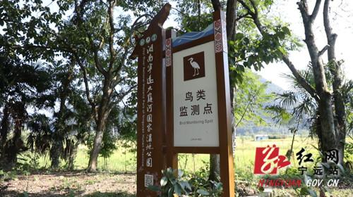 """宁远:九嶷河国家湿地公园成为温馨的候鸟""""驿站""""3_副本500.jpg"""