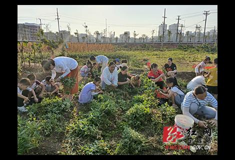欢乐暑假:宁远创新学生劳动教育将课堂搬到田间地头