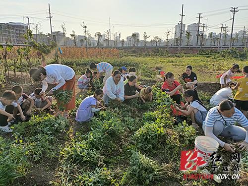 欢乐暑假:宁远创新学生劳动教育将课堂搬到田间地头500.jpg