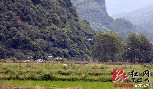 【生态宁远】湿地观鸟 亲近自然_副本500.jpg