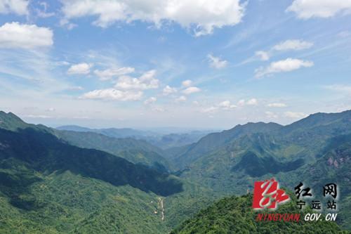 宁远:九嶷山新发现一片斑竹林2_副本500.jpg